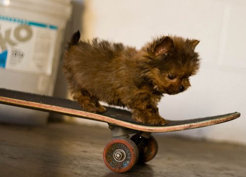 Mike on Skateboard