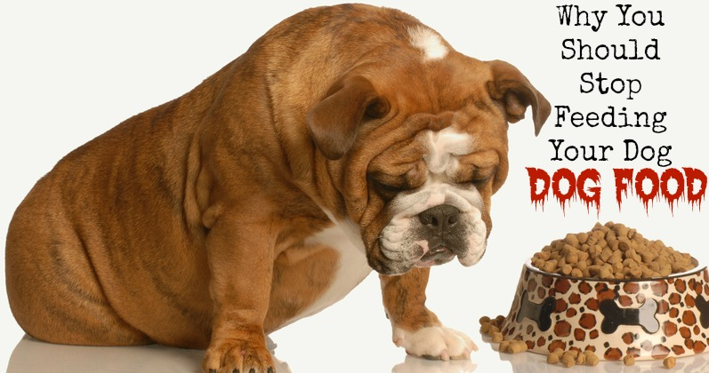 stop feeding your dog commercial dog food