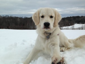 feed your dog raw food in winter