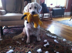 feed your dog raw food, not stuffed animals