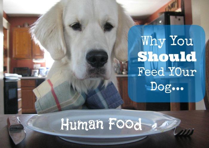 feed your dog human food
