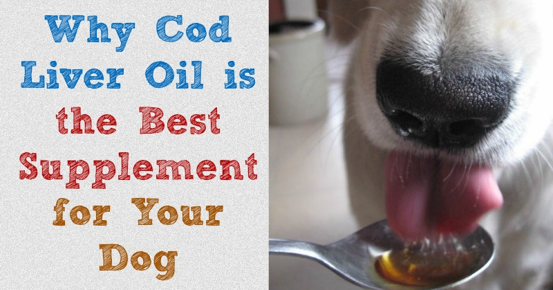 An explainantion of the many benefits of cod liver oil for dogs and why it's the best supplement for your dog.