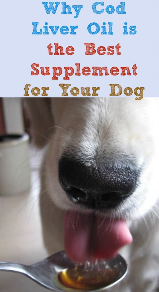 Why Cod Liver Oil is the Best Supplement for Your Dog