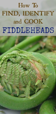 Find, Identify, and Cook Fiddleheads