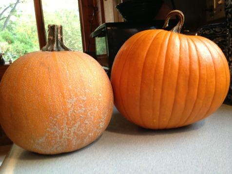 picking the right pumpkins