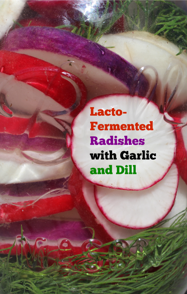 Lacto-fermented radishes are not as common as other fermented vegetables but this recipe is so simple that it just might become a staple in your kitchen.