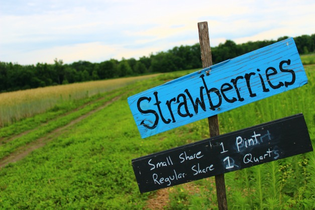 Pick your own strawberries are one of many reasons to join a CSA