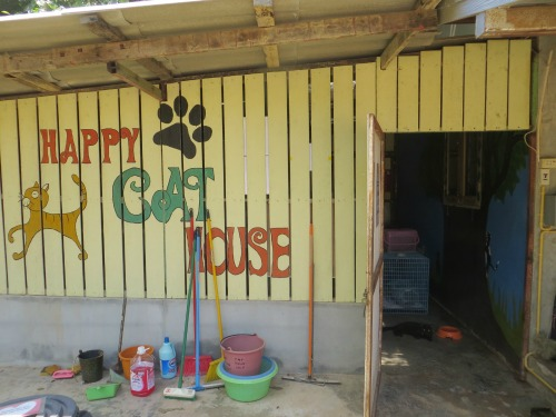 lanta animal welfare cat house