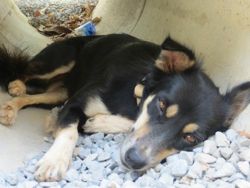 sweet dog at animal shelter