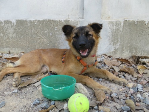 puppy at lanta animal welfare
