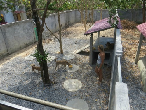 dog pen at lanta animal welfare