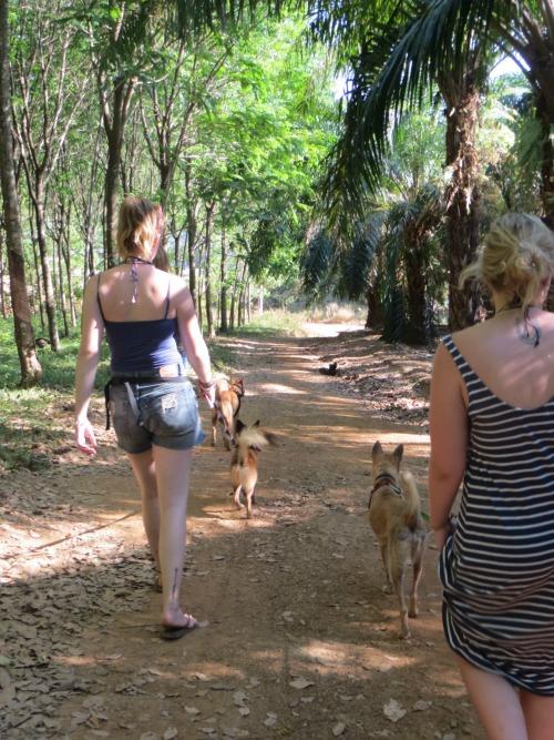 dog walk at lanta animal welfare