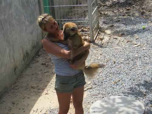 cute pup at lanta animal welfare