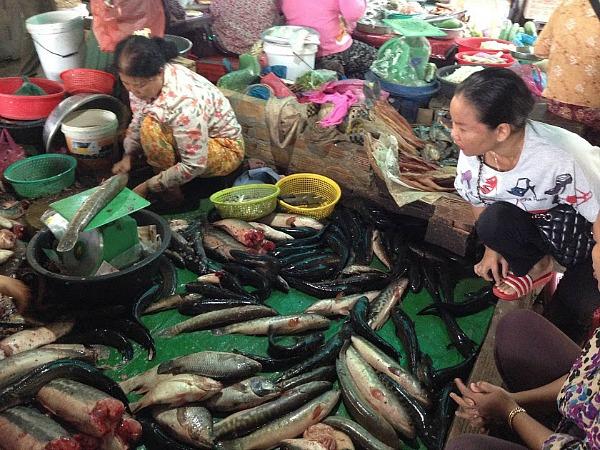 shopping at the fish market