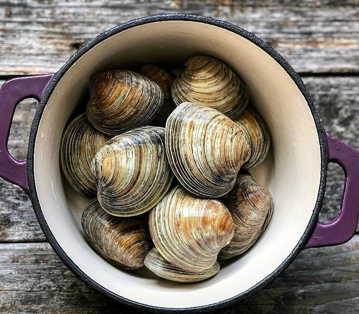 chowder clams