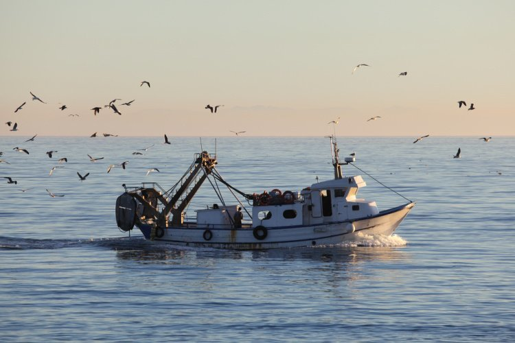 how and why to join community supported fisheries