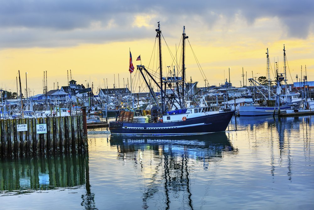 community supported fishery fleet