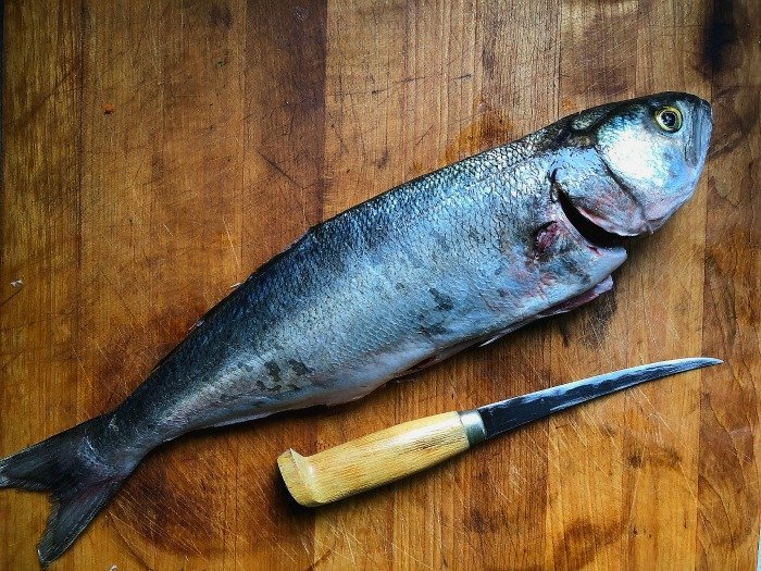bluefish as a good example of how to eat like a fish