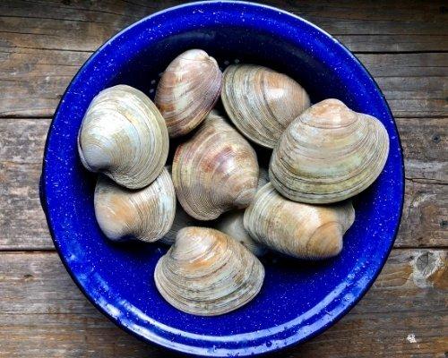 whole quahog clams